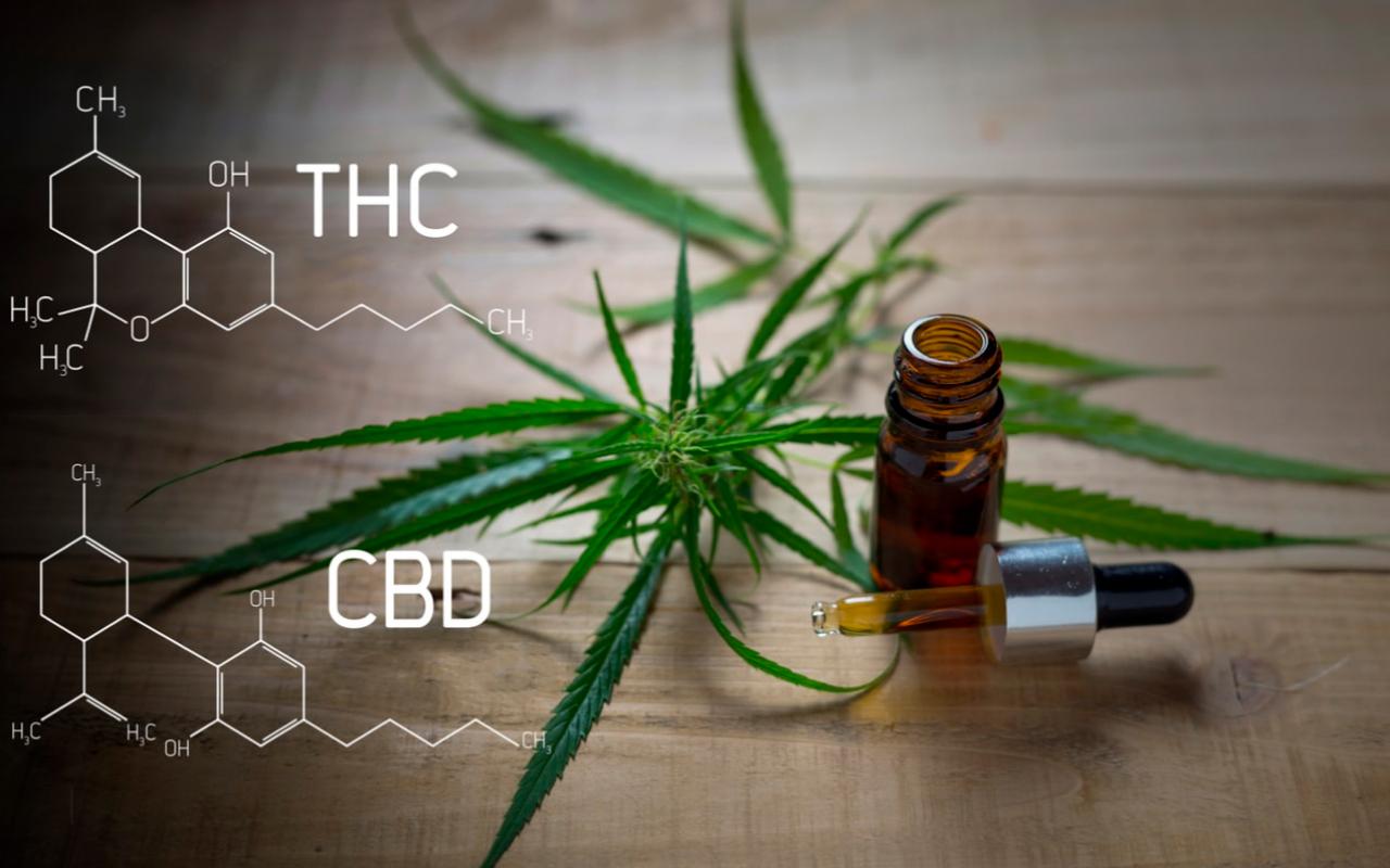 CBD vs THC: ¿Cuál es la diferencia?